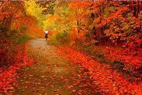 musim-gugur-jepang